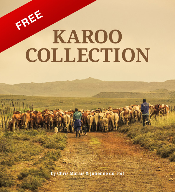 collectionFREE