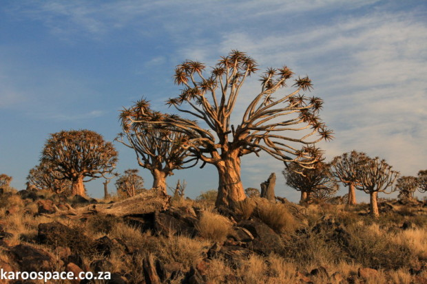 quiver trees Kenhardt
