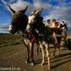Karoo, donkey cart