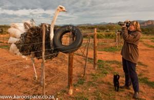 Ostrich, Julienne du Toit