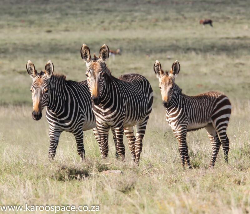 Mountain Zebra National Park Karoo Space
