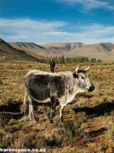 Karoo farming