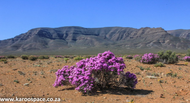 A silent, tangible grace lies before you in this flowering desert.