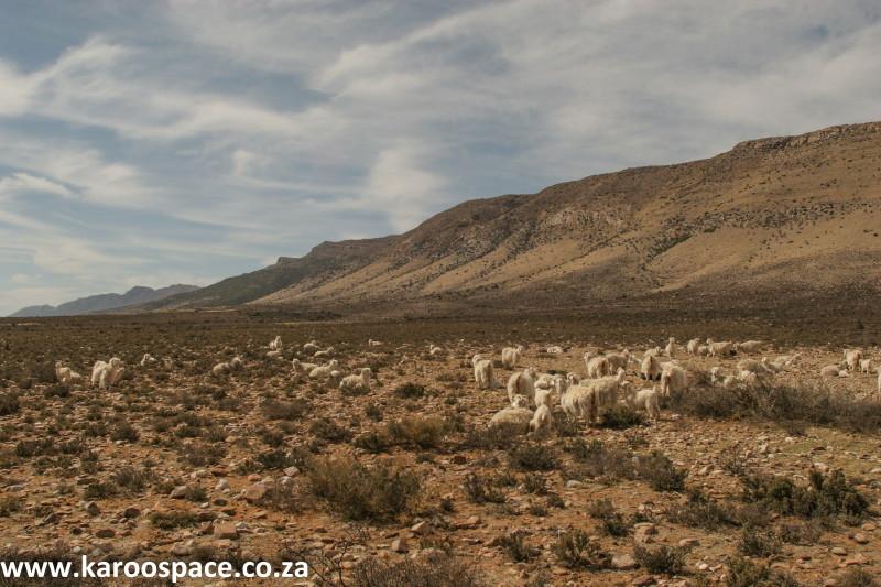 fleece 1