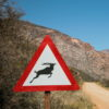 Kudu sign, Karoo