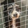 Cradock Animal Shelter