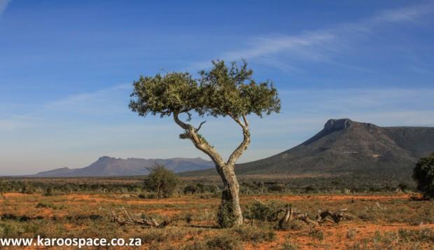 shepherd's tree, samara, karoo