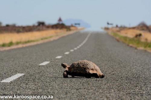 karoo roads