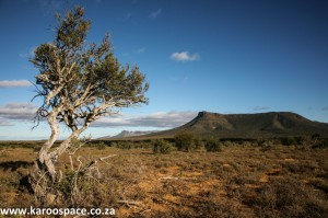Karoo and Shepherd's Tree