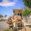 Donkey cart, Willowmore, Karoo