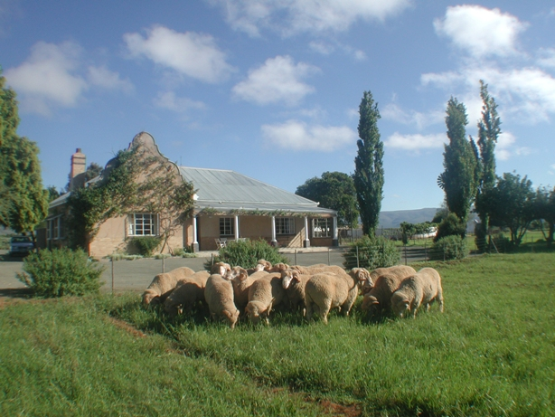 Wellwood Merinos and Trymore Cottage