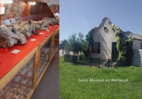 Wellwood Fossil Museum