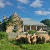 Wellwood farm, Karoo, Graaff-Reinet