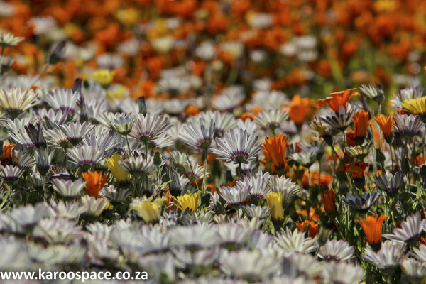 namaqualand, northern cape