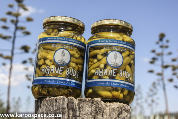 Agave Pickled Buds by Roode Bloem farm north of Graaff-Reinet.