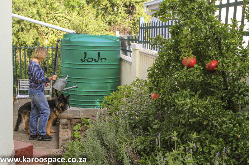 rain tank veggie garden