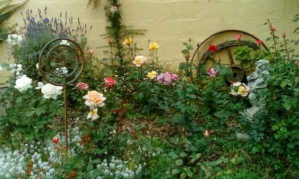 Butterfly Mews Garden Roses