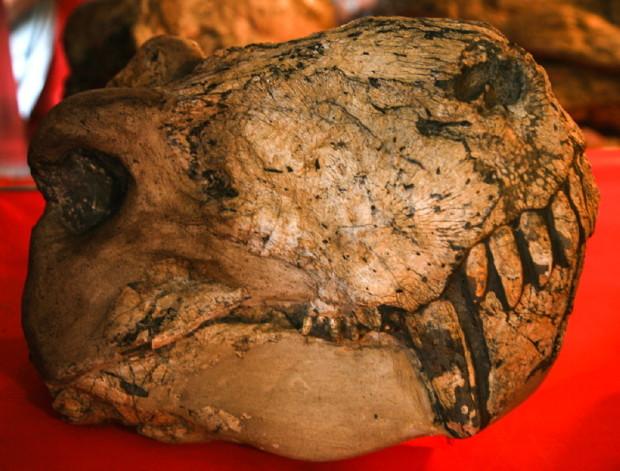 Gorgonopsian