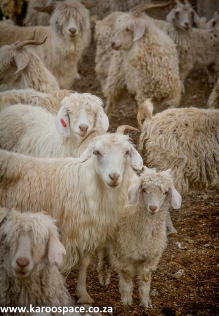 fleece 2