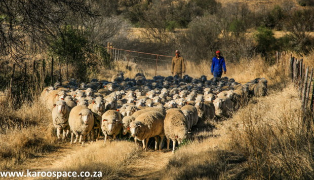 There are about 100 000 people employed in Karoo farming.