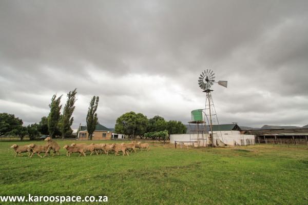 wellwood farm